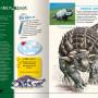 dinozaury_rozkladowka_1